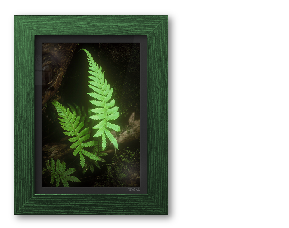 Maui Fern on the Road to Hana Photograph